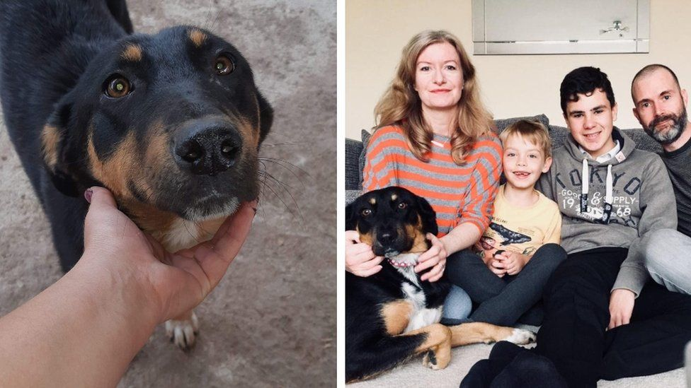 Rescue dog before (r) and now with new family in UK (l)