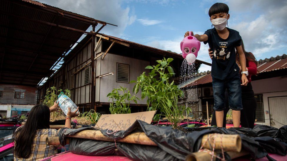 The son of a Thai staff members of the Ratchaphruek Taxi Cooperative waters their community vegetable garden that was built on top of out of use Thai taxis on September 13, 2021 in Bangkok, Thailand.