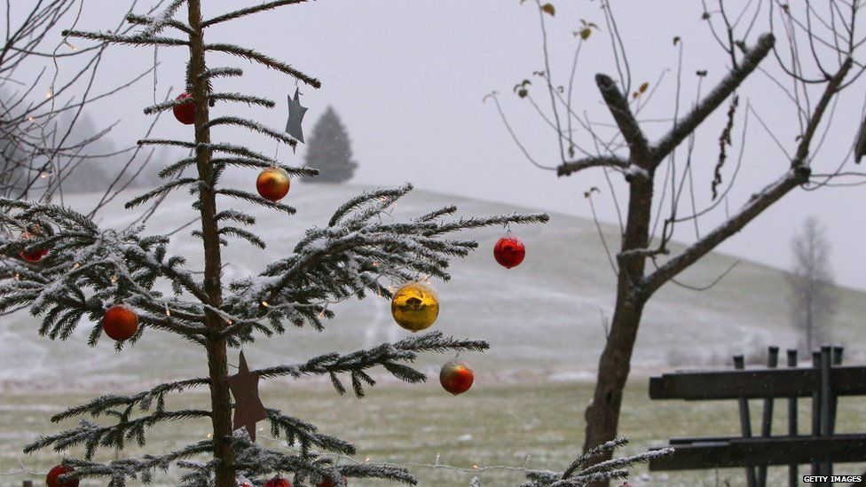 Turn your Christmas tree into a plant for the garden or a local park