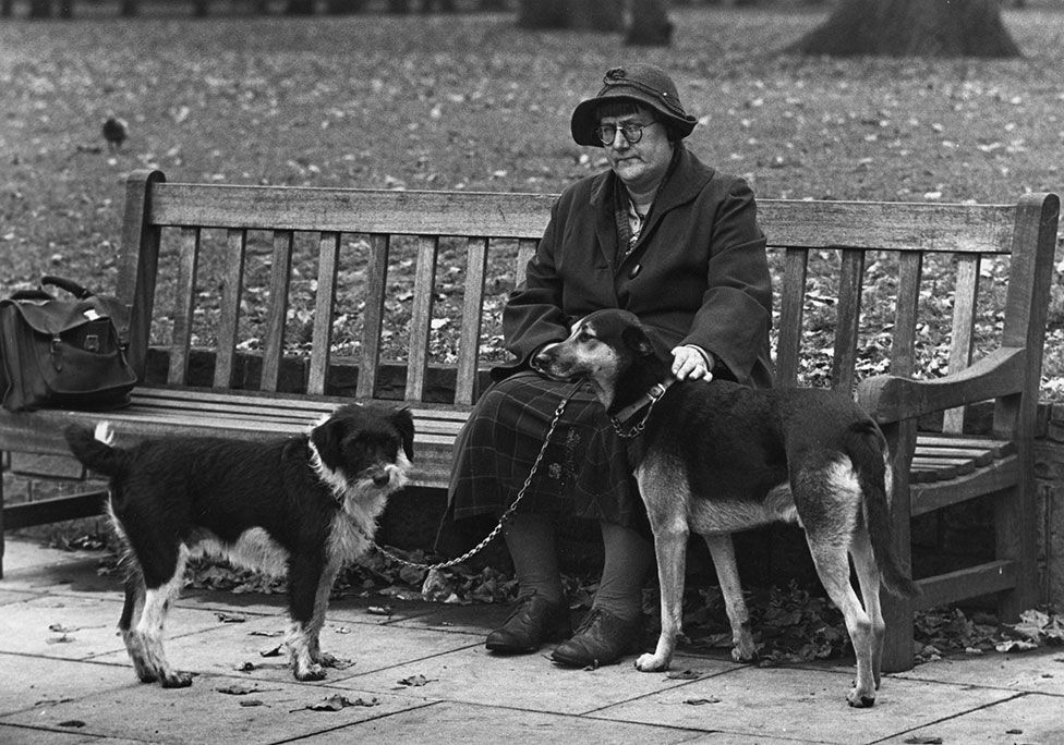 A woman sits on a bench with two dogs