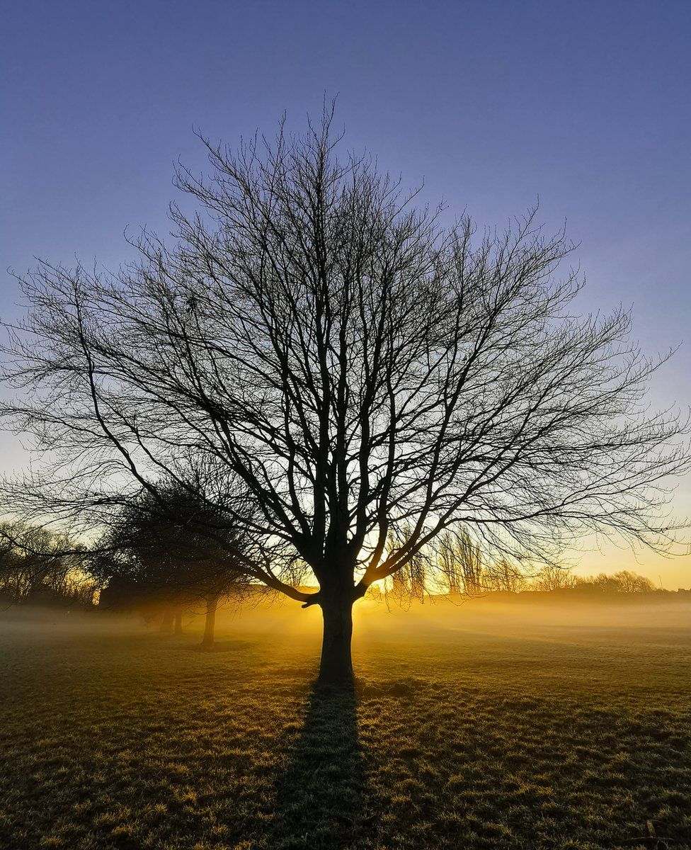 A tree in a foggy field