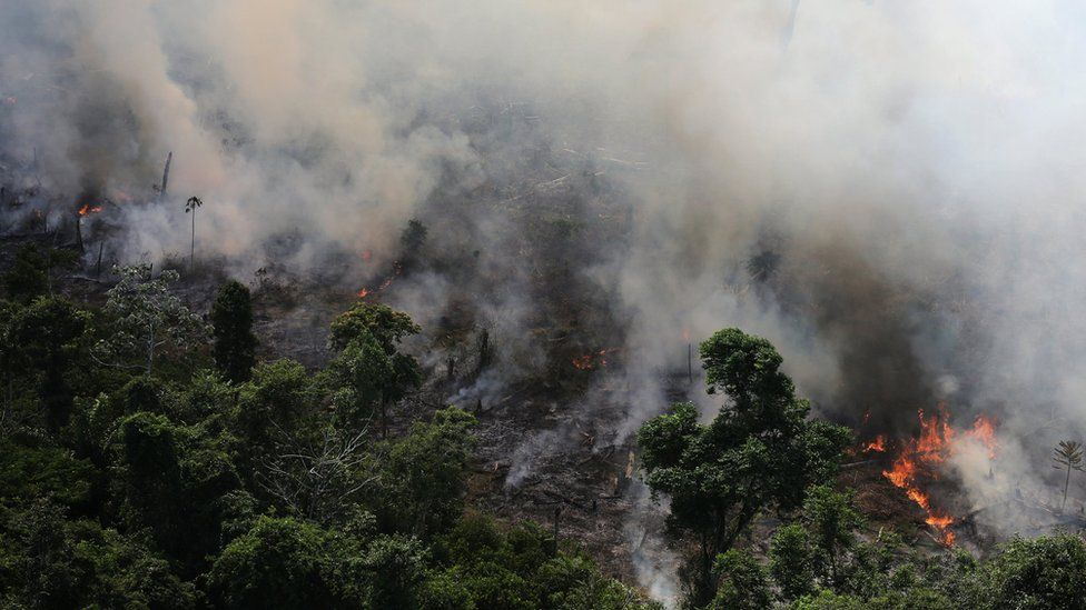 Amazon rainforest fires: Ten readers' questions answered