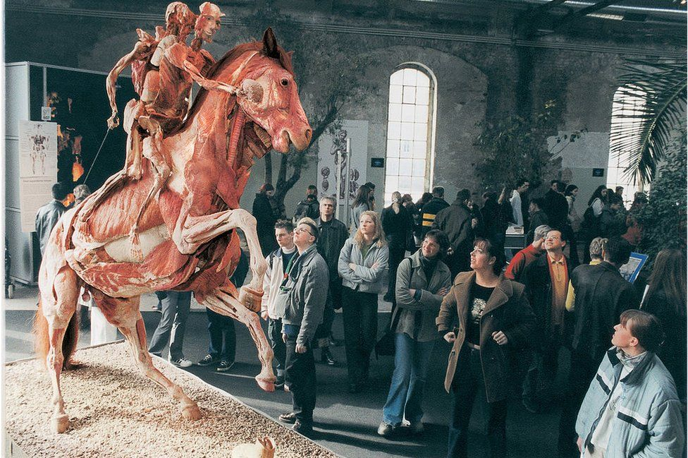 Peeled horse and riders