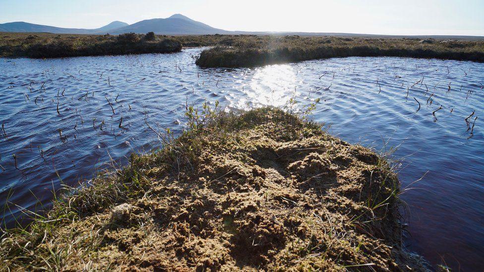 flow country bog