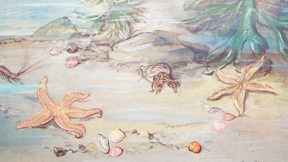 Illustrations of starfish