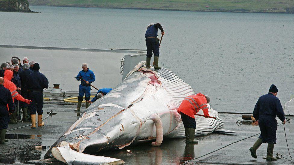 Bolsonaro tem razão sobre a Noruega? País quer proteção da Amazônia, mas se recusa a proibir caça a baleias