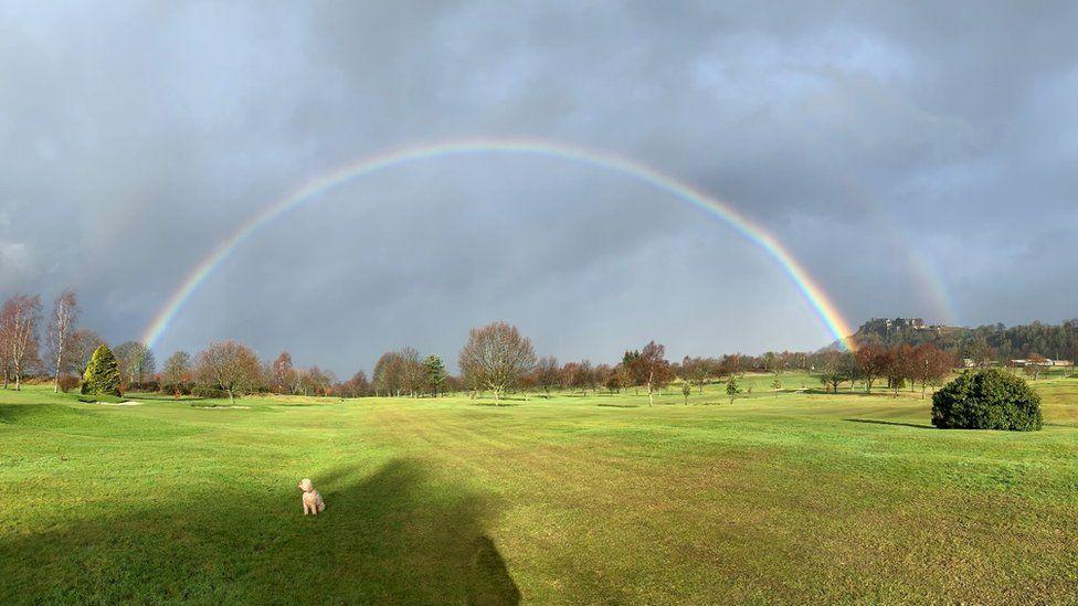 Dog under rainbow