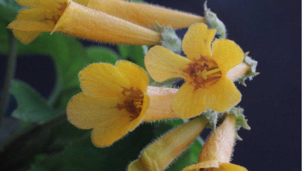 Bright-orange-flowered plant from Vietnam