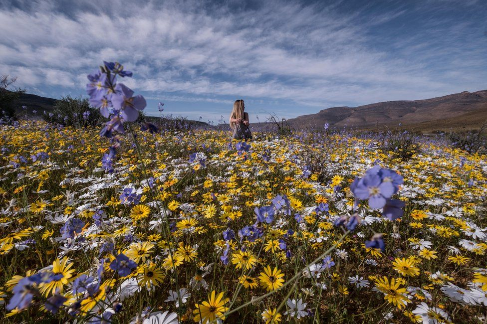 spectacular super bloom transforms south african desert bbc news