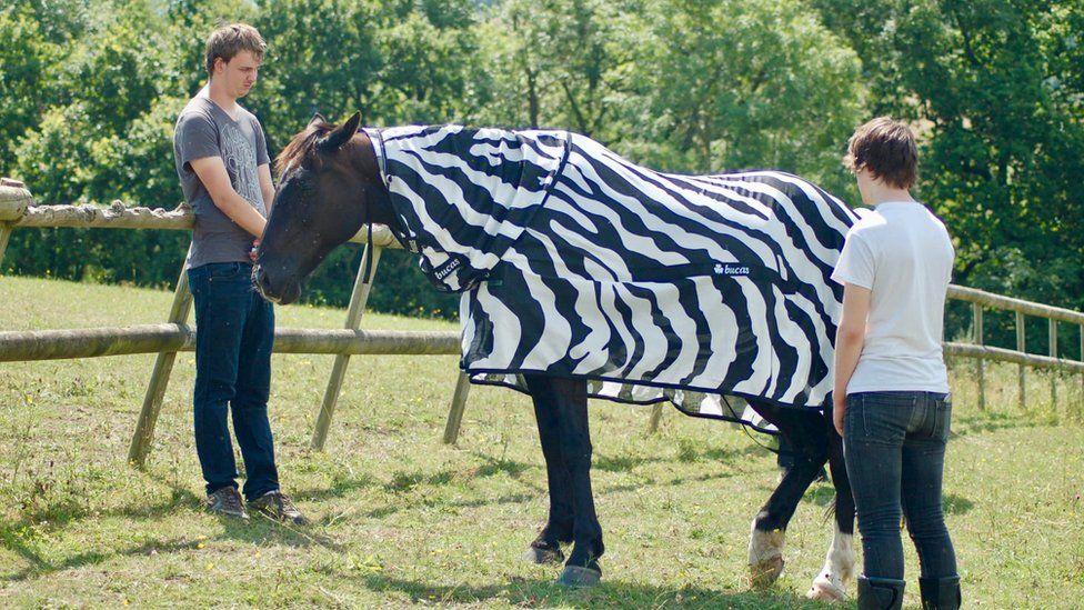 A horse modelling a zebra stripe coat