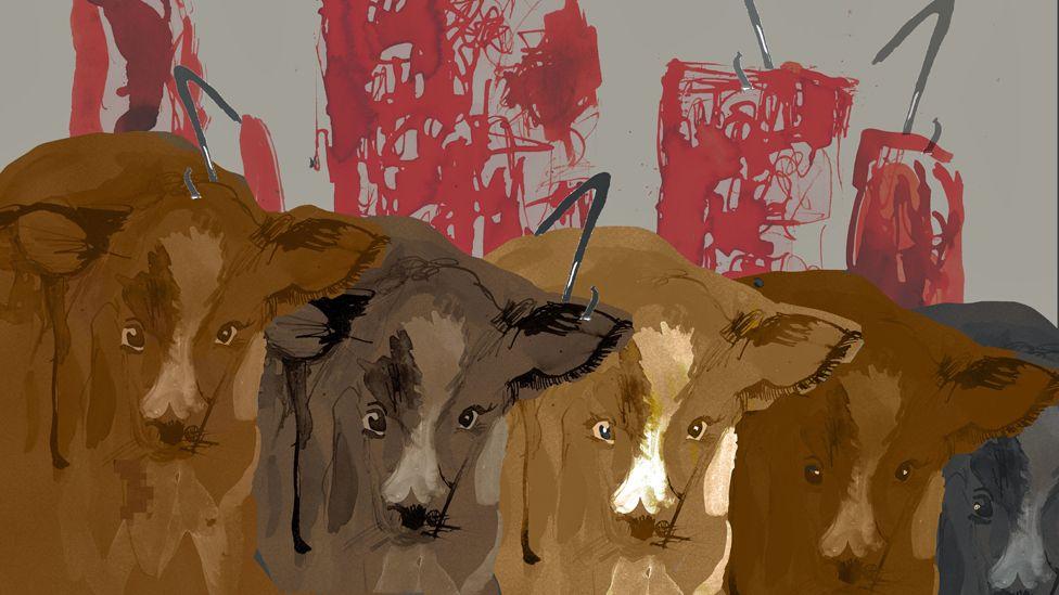 Five calves