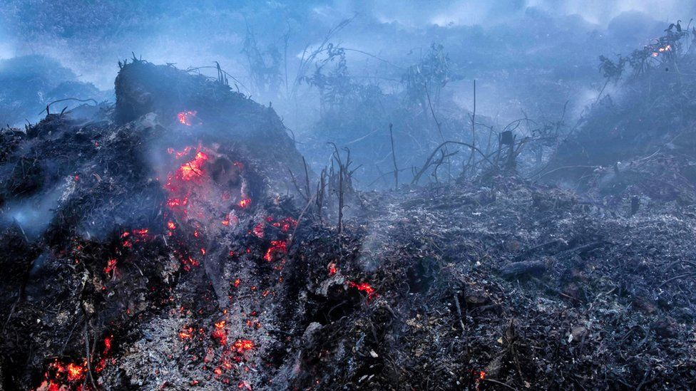 A freshly scorched landscape is seen in Riau, Indonesia