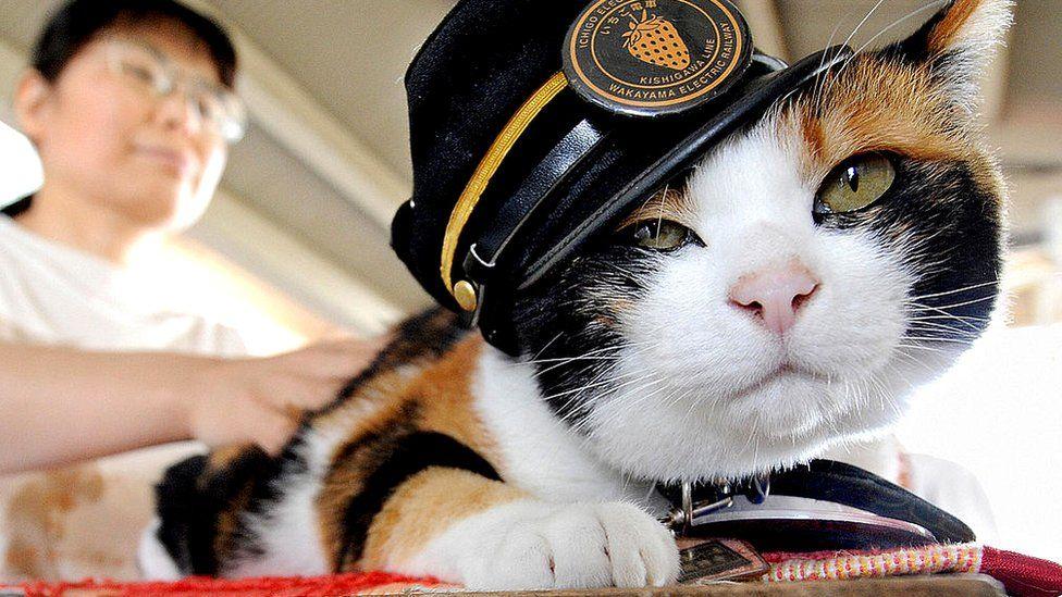 Кошка-самурай, которая спасла японскую железную дорогу