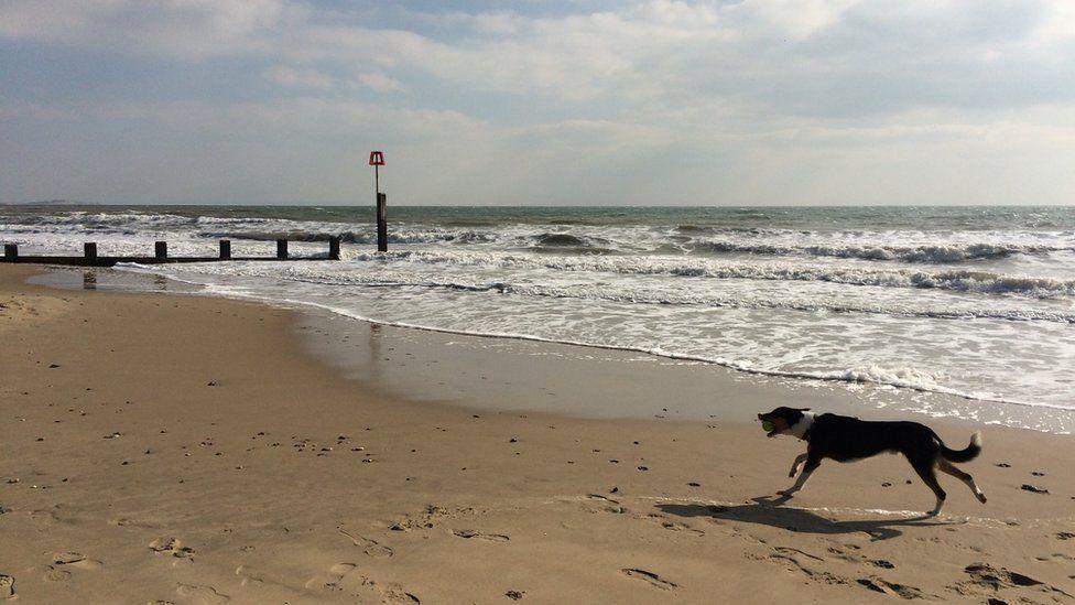 Dog on Bournemouth beach