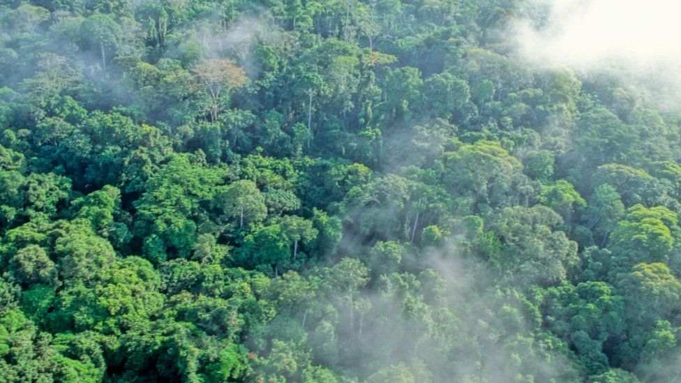 Aerial shot of the rainforest