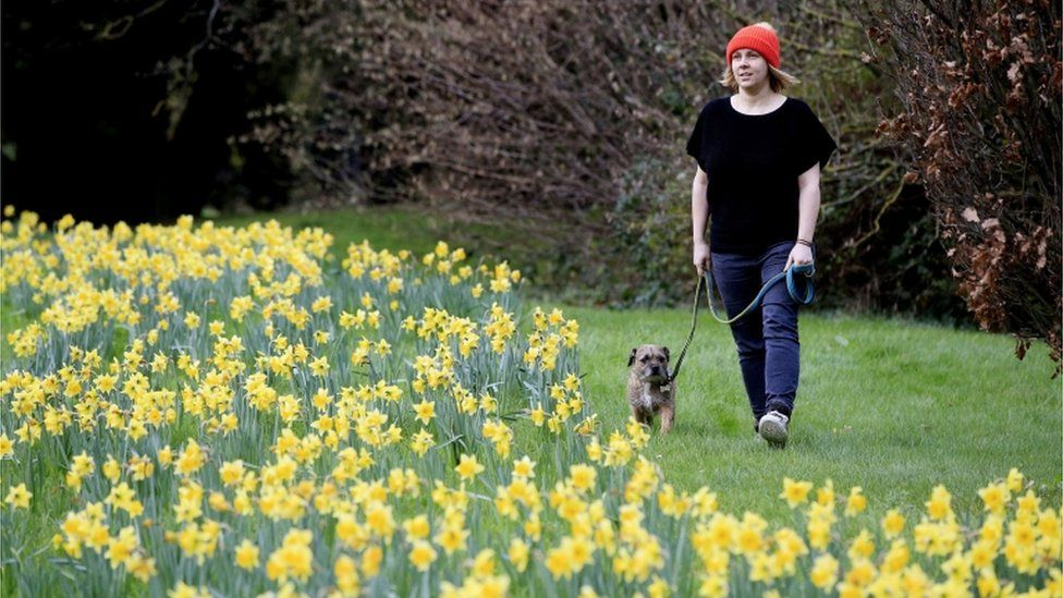 Kathryn Sharples and her dog, Iggy, visit a patch of blossoming daffodils in Maidenhead, Berkshire, on 26 December 2015
