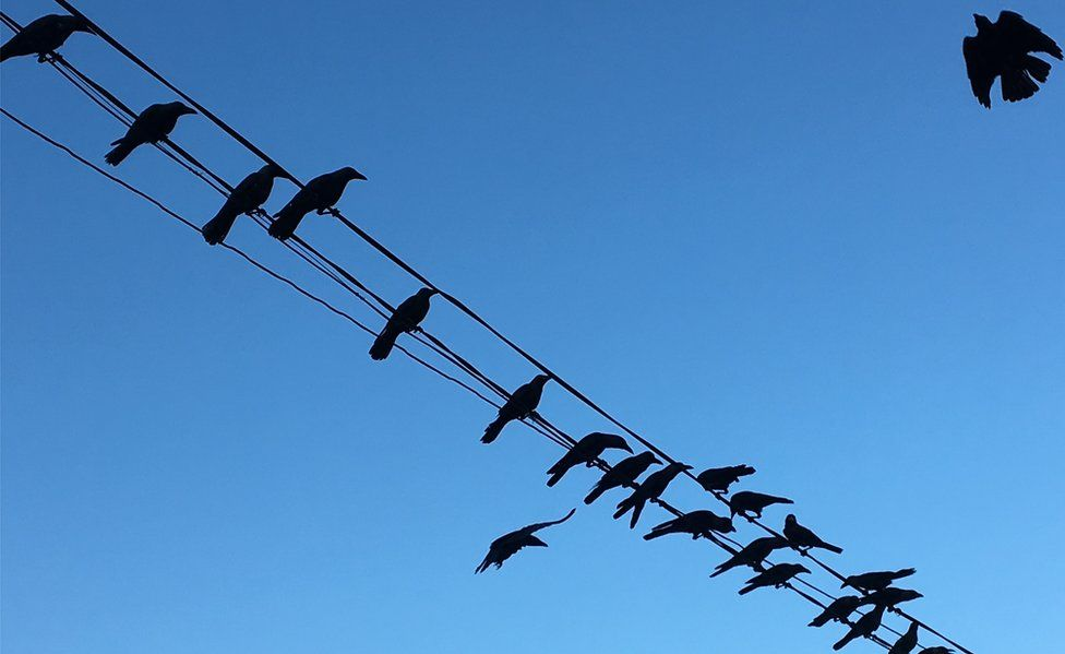 Birds silhouetted on an overhead wire