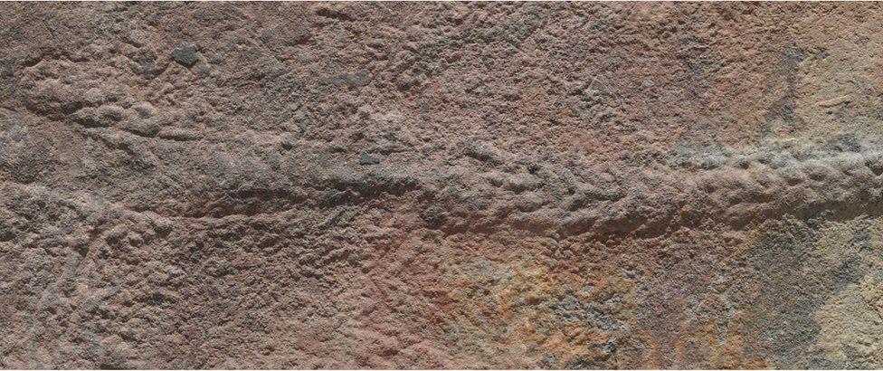 Yilingia spiciformis