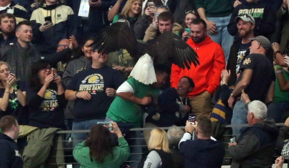 Clark the eagle lands on the shoulder of Notre Dame fan Albert Armas, as his son laughs and leans away to avoid the massive bird