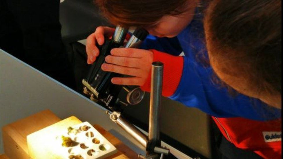 Girl studying bugs through a microscope