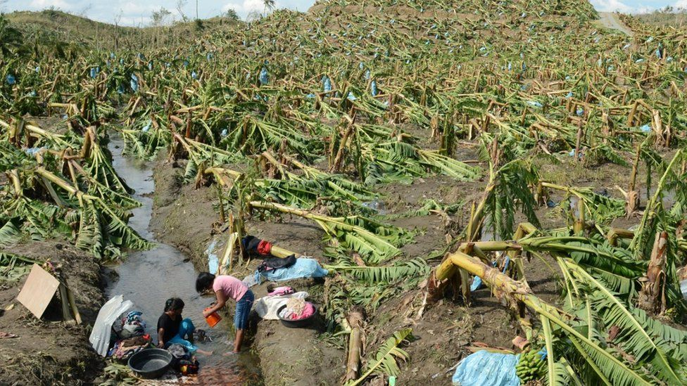 Two women clean up in a banana plantation after a typhoon