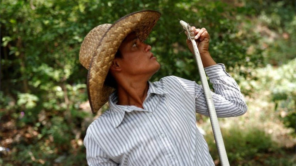 A migrant holds up a snake at the banks of a river in Oaxaca.