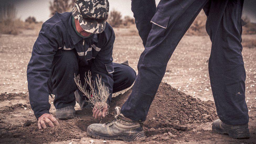 Planting saxaul trees on the Aral Sea bed in Uzbekistan by Paul Ivan Harris