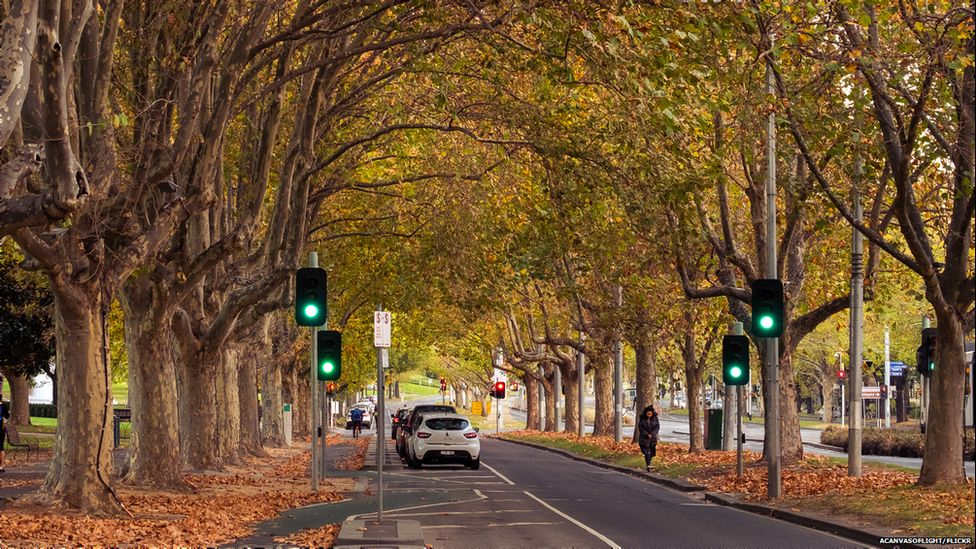 Avenue of trees, Melbourne, Australia (Image: Canvas of Light/Flickr)
