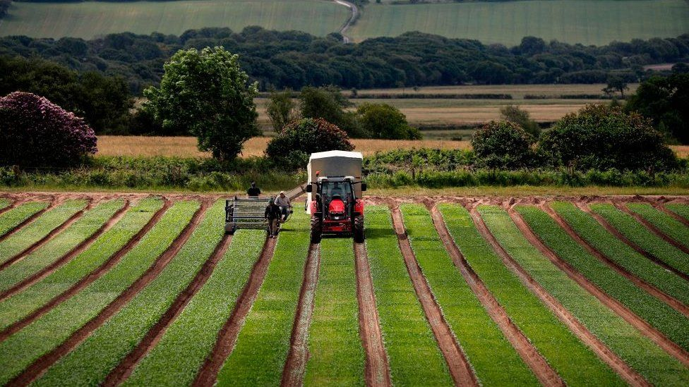 Farm, UK