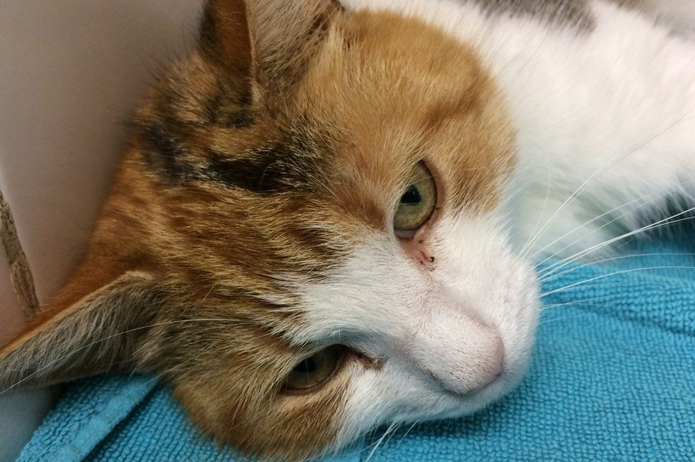 Cat found in Chatteris