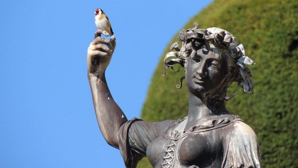 Goldfinch at Powis Castle