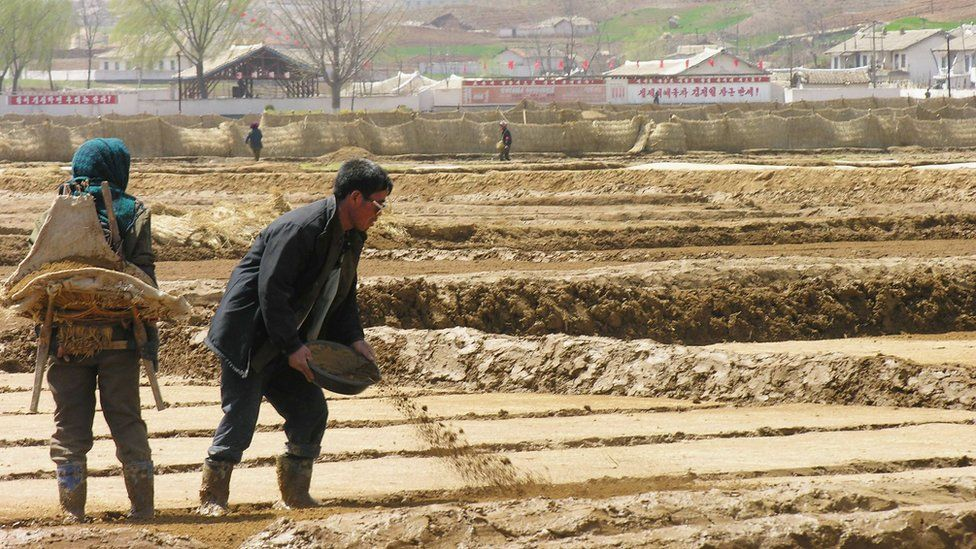 Farm workers prepare fields for rice transplanting near Sariwon city, North Hwanghae province, North Korea.
