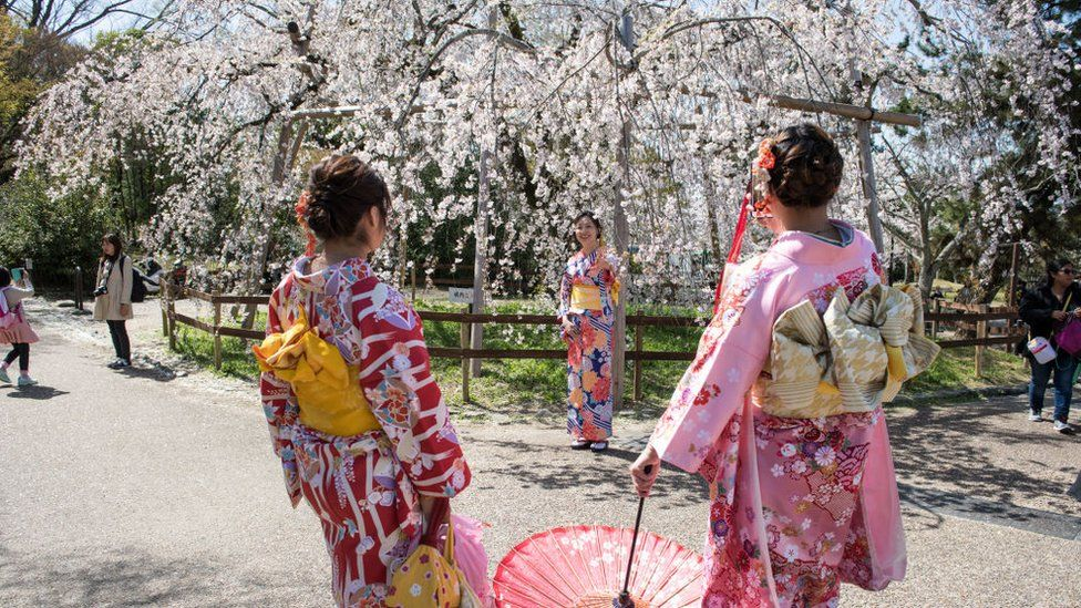Japan cherry blossom season wilted by the coronavirus pandemic - BBC News