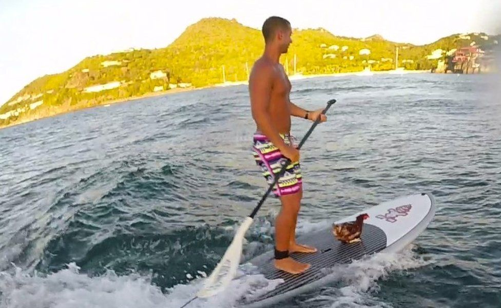 Sailor Guirec Soudee and hen Monique on a surfboard in the Antilles