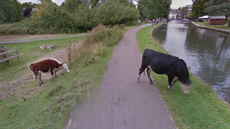 Google Streetview image showing blurred cow face in Cambridge