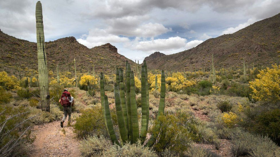 An activist hikes in the Organ Pipe Cactus National Monument