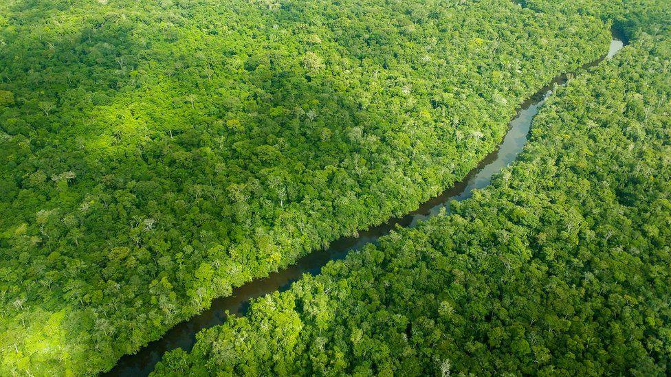 Manifesto assinado por 602 cientistas pede que Europa pare de 'importar desmatamento' do Brasil
