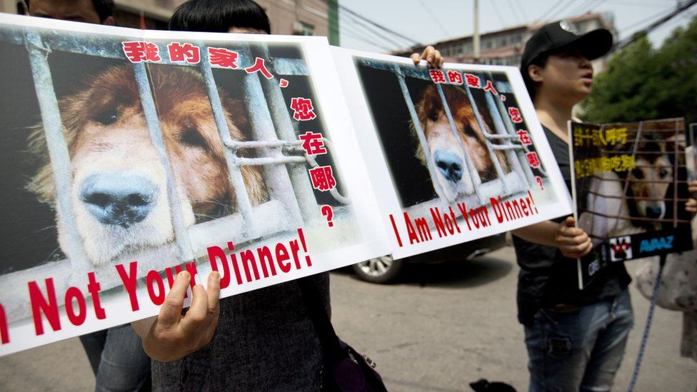 Animal rights advocates hold protest signs outside the Yulin government office in Beijing, Friday, June 10, 2016.