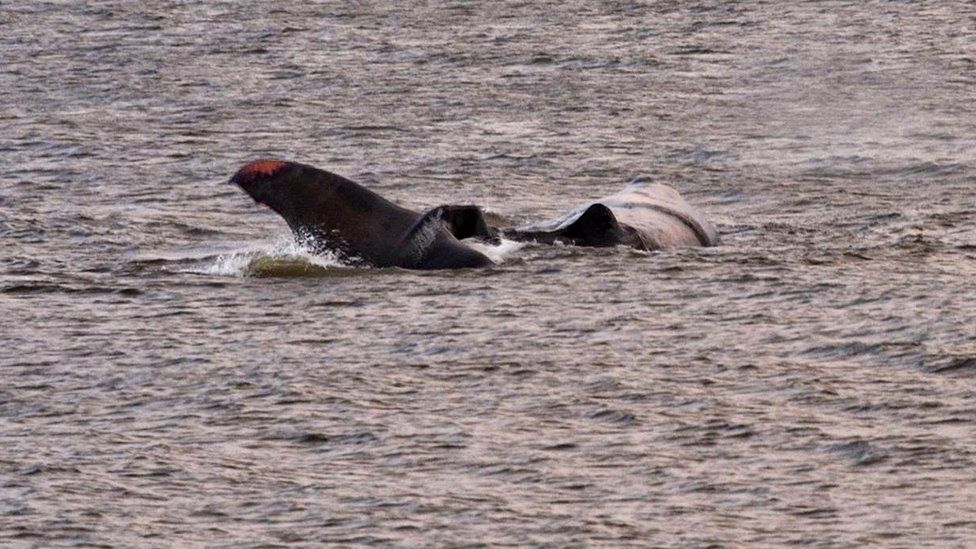 Whale in shallow water at Hunstanton