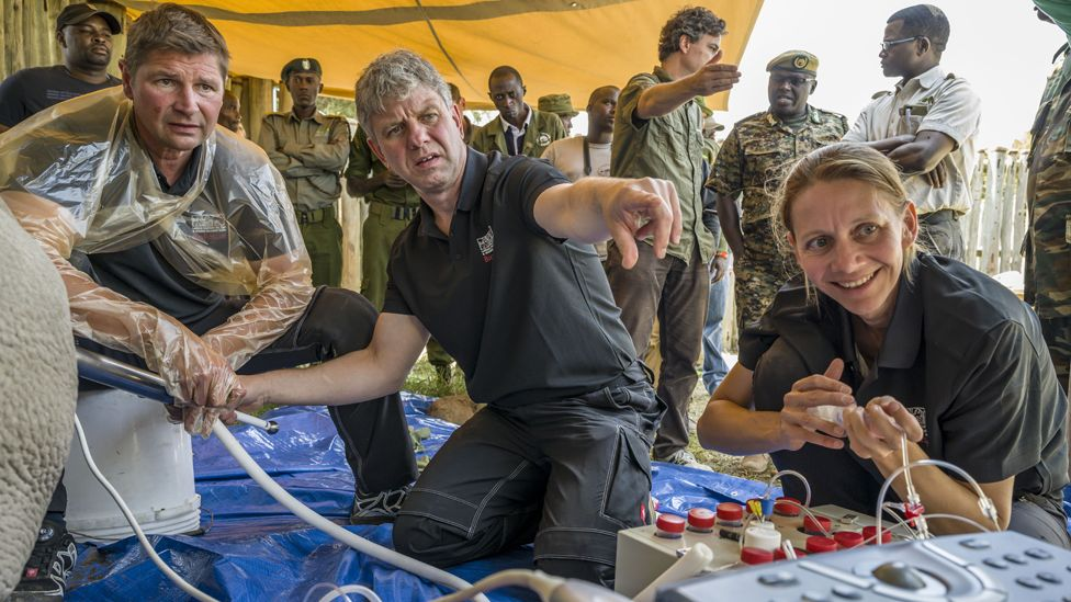 Fatu is undergoing the ovum pick-up procedure performed by Robert Hermesfrom (L) , Thomas Hildebrandt (C) Susanne Holtze (R)