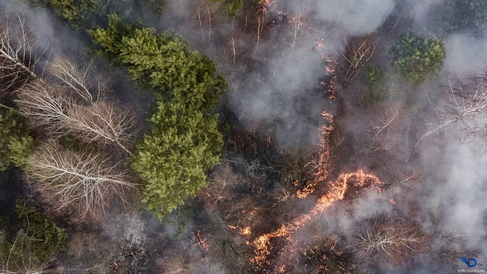 A fire burns in a forest in Ukraine
