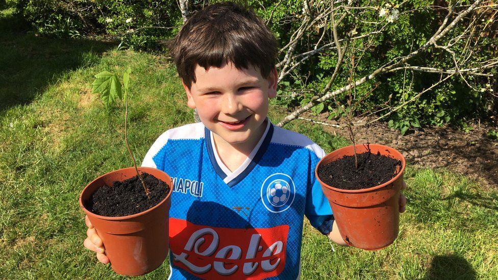 Freddie grows Rowan saplings
