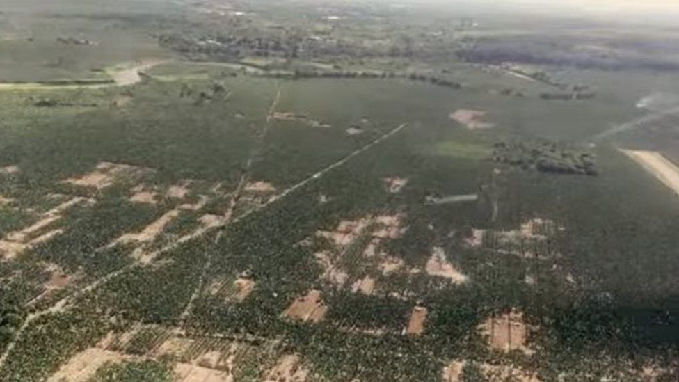 View of barren patches in banana fields caused by Panama Diesease