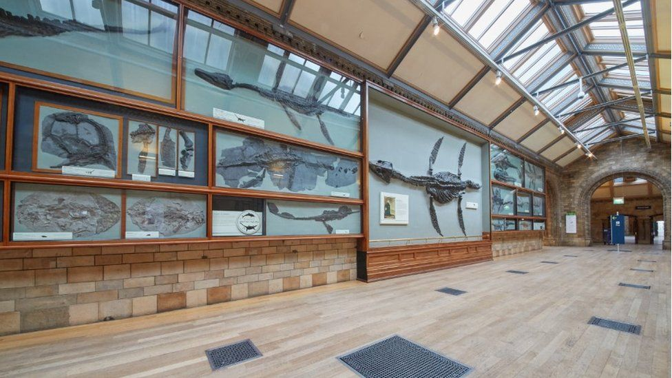 Fossil Way Gallery in the Natural History Museum