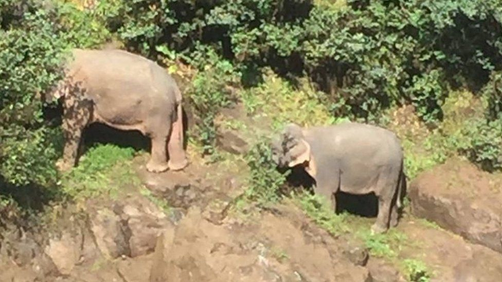 Two elephants stand on the edge of a cliff near the waterfall