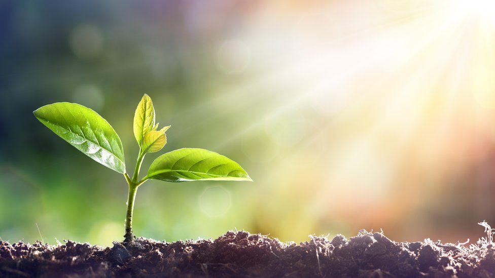 La memoria de las plantas: ¿de qué se acuerdan y por qué es vital ...