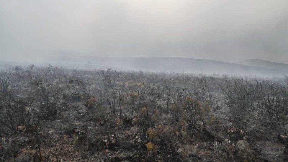 Ashes on Kilimanjaro