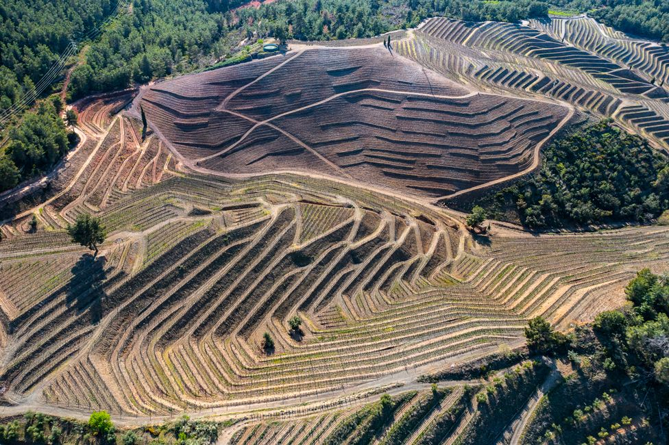 Human-made stepped vineyards in Spain