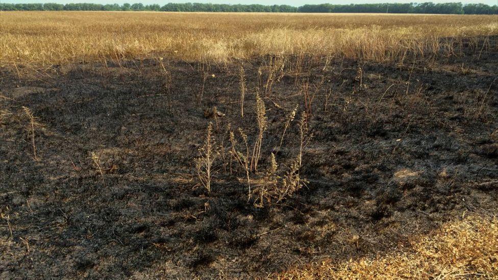 Burn mark in field within area identified by report