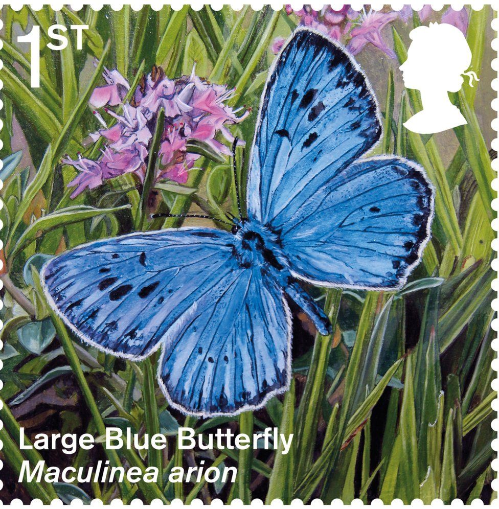 Large blue butterfly stamp